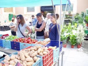 Palma market